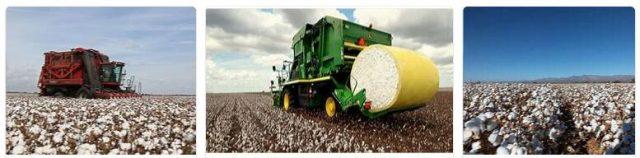 Cotton Producing