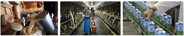 Milk Producing